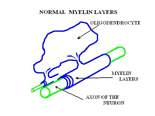 foto-2-teaca-mielina